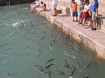 OzDarFishFeedingPB020329