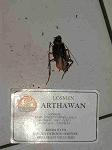 InBaKutaArthawanPb300012